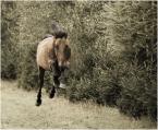 """Maskotka """"Superhorse"""" (2008-08-22 11:20:02) komentarzy: 45, ostatni: Radość z życia, wo9lny i swobodny. Super fota."""