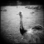 """Lleika """"Eyes Wide Shut"""" (2008-08-30 21:40:14) komentarzy: 6, ostatni: Ja myślałam, że kondor."""