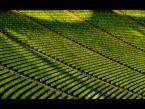 """mikerus """"Pustka w odcieniach zieleni."""" (2008-09-05 15:43:48) komentarzy: 22, ostatni: git"""