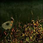 "Ravkosz ""babie lato"" (2008-09-13 19:34:37) komentarzy: 7, ostatni: Ładne"