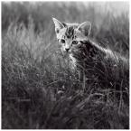 "Blancheflor ""little boy"" (2008-09-14 12:55:37) komentarzy: 23, ostatni: tygryś;]"