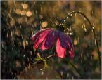 """krys_art """"W świetle"""" (2008-09-15 23:29:21) komentarzy: 26, ostatni: bardzo ładne ma coś ......:)"""