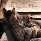 """*hanna* """"rodzeństwo"""" (2008-09-17 00:08:45) komentarzy: 8, ostatni: kjut :o)"""