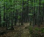 """Rzok Piotr """"las"""" (2008-09-26 11:22:37) komentarzy: 4, ostatni: Zdjęcie, które oddaje rzeczywistość. Brak jakichkolwiek przeróbek wyszedł na dobre."""