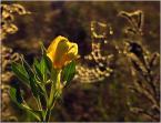 """krys_art """"Ubiór złotej szatay z pajęczynki"""" (2008-09-28 23:33:58) komentarzy: 10, ostatni: Światełko dopomogło ;-)"""