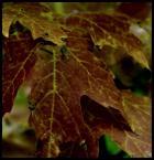 """makbet """"Barwy Jesieni II"""" (2008-10-01 22:57:50) komentarzy: 0, ostatni:"""