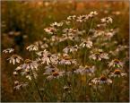 """krys_art """"Na łące"""" (2008-10-03 20:34:27) komentarzy: 10, ostatni: chyba zacznę fotografować kwiaty - czad!"""