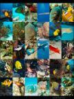 """Luhan """"Zupa rybna"""" (2008-10-03 21:54:35) komentarzy: 10, ostatni: Kolega poprosił mnie o zdjęcia ryb w pionie, ciężko było. Pomyślałem przy okazcji, żeby zrobić z tego taki plakacik, niekoniecznie do druku..."""
