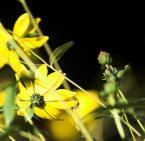 """BogusławSiemek """"nowe kwiatowe impresje 2"""" (2008-10-04 16:02:04) komentarzy: 2, ostatni: kosz"""