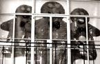 """grubyadas """"pięćciastek"""" (2008-10-04 18:43:12) komentarzy: 3, ostatni: głodnemu ciacho na mysli jak mawiają w Zasiedmiogórogrodzie ;)"""