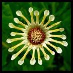 """amator_sliwek """"kwiatuszek"""" (2008-10-05 21:33:58) komentarzy: 4, ostatni: jak sie ten kwiatuszek nazywa?"""