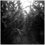 "invention ""* ( cornfield / inside )"" (2008-10-06 12:12:09) komentarzy: 9, ostatni: :]"