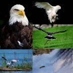 """Maciej Qrek """"i tak bywa"""" (2008-10-06 18:53:26) komentarzy: 11, ostatni: i po ptokach...."""