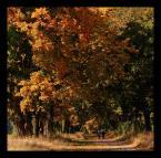 """ilcia """"złoty parasol"""" (2008-10-07 21:10:42) komentarzy: 19, ostatni: jesień, drzewa, kolory - moje ulubione tematy :))) bardzo dobra fotografia"""