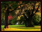 """robsson """"jesienne klimaty"""" (2008-10-08 17:41:48) komentarzy: 7, ostatni: przyjemnie,jesiennie"""
