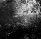 """dogfog """"***"""" (2008-10-08 21:59:14) komentarzy: 40, ostatni: ten Twój zaczarowany las zdecydowanie w kolorze, zdecydowanie ;)"""