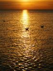 """asiasido """"letnie wspomnienie"""" (2008-10-10 07:27:17) komentarzy: 8, ostatni: Kraina króla Midasa :)"""