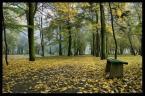 """marcin8530 """"Poranne wędrówki po parku..."""" (2008-10-12 13:16:21) komentarzy: 16, ostatni: dla mnie genialne!!!"""