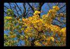 """popo007 """"jesień w obiektywie"""" (2008-10-12 16:54:22) komentarzy: 1, ostatni: fajne kolorki :)"""