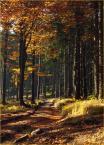 """Anka """""""" (2008-10-13 10:15:08) komentarzy: 7, ostatni: ...jesień,jesień,jesień...:)))"""