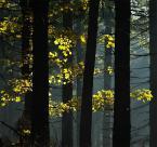 """Anka """""""" (2008-10-13 11:44:17) komentarzy: 27, ostatni: zawsze lubie soczystosc kolorow takiego swiatla"""