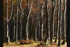 "Anka """" (2008-10-14 18:17:48) komentarzy: 24, ostatni: lubię taki las"