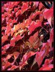 """izucha1974 """"Jesień"""" (2008-10-14 19:10:27) komentarzy: 3, ostatni: słabe"""