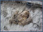"""soban78 """"martwa natura (z serii \""""suszki\"""")"""" (2008-10-16 13:15:28) komentarzy: 16, ostatni: Skojarzył mi się z pterodaktylem ;P"""