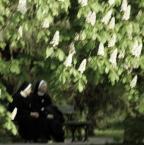"""barszczon """"czas kwitnienia kasztanów"""" (2008-10-16 13:18:11) komentarzy: 55, ostatni: to se nevrati..."""