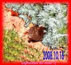 """Jacek - Bandit Jack """"Jez ucieka ..."""" (2008-10-16 16:57:12) komentarzy: 82, ostatni: dla mnie to żółw, bo powoli dosyć ucieka"""