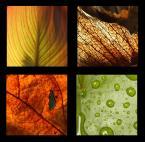 """camomile_girl """"colors of fall"""" (2008-10-17 11:14:13) komentarzy: 46, ostatni: bardzo udany kolaż"""