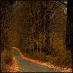 """W-Zy """"Jesienna droga"""" (2008-10-17 20:26:16) komentarzy: 15, ostatni: urokliwa pora roku +++"""
