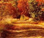 """Romek P. PISZ """"Droga przez jesień"""" (2008-10-21 21:42:10) komentarzy: 21, ostatni: upatrzone miejsce i słoneczko."""