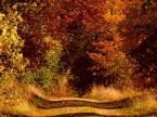 """Romek P. PISZ """"Droga przez jesien II"""" (2008-10-21 22:11:06) komentarzy: 15, ostatni: +++"""