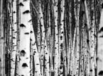 """sakahet """"Tate Modern"""" (2008-10-23 16:05:42) komentarzy: 35, ostatni: świetne ;)"""