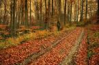 """damk """"jesień"""" (2008-10-24 15:53:30) komentarzy: 22, ostatni: O, wkrótce będzie tak jak tu!"""