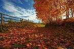 """maszu """"jesień"""" (2008-10-25 12:21:26) komentarzy: 11, ostatni: fajne kolory"""