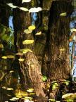 """antropina """"jesień"""" (2008-10-26 18:41:12) komentarzy: 2, ostatni: ładnie"""