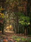 """agakolo """"jesień"""" (2008-10-28 22:27:19) komentarzy: 0, ostatni:"""