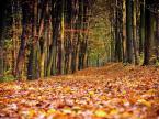 """ro4 """"lawinisko"""" (2008-10-30 10:43:02) komentarzy: 2, ostatni: i szelest dywanu słychać ..."""