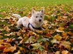 """skippy """"brudasek"""" (2008-10-31 10:21:27) komentarzy: 6, ostatni: Trochę brakuje mi głębi ostrości, no i jeszcze jakby było pstryknięte z poziomu psa to byłoby lux ;)"""