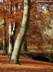 """Izabela Jankowska """"Jesienny światłocień"""" (2008-11-01 10:34:22) komentarzy: 3, ostatni: Ładne urok Bukowych drzew"""