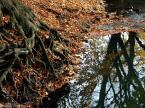 """Izabela Jankowska """"*"""" (2008-11-01 10:39:45) komentarzy: 1, ostatni: takie leśne nastroje"""