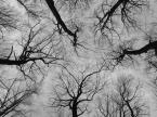 """konirl """". . ."""" (2008-11-06 17:14:43) komentarzy: 14, ostatni: jedno z nielicznych tego typu które mi sie podoba.. wielu robiło pionowo w lesie ale efekty widziałem mierne.. tu jest fajnie.."""