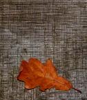 """byebasket """"samotny ..."""" (2008-11-06 19:18:33) komentarzy: 14, ostatni: wielu umiera w samotnosci tej ktora czasem nie pasuje ..."""