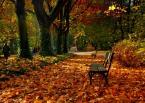 """E.K. """"Ławeczka."""" (2008-11-06 20:19:44) komentarzy: 48, ostatni: ja lubię jesień"""