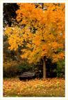 """robsson """"jesien naturalnie"""" (2008-11-06 22:50:37) komentarzy: 17, ostatni: bardzo na tak"""