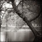 "MonikaMM ""Drottningholm"" (2008-11-10 18:05:35) komentarzy: 8, ostatni: klimat ma"