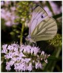 """mario1972 """"Odgrzewany motyl.."""" (2008-11-11 16:54:04) komentarzy: 9, ostatni: Lepiej późno - niż wcale. Dziękuję Ci za prezencik - na taki dzień, jak dziś - jak znalazł :)"""