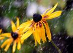 "shenice ""deszcz"" (2008-11-14 19:36:23) komentarzy: 6, ostatni: b dobre"